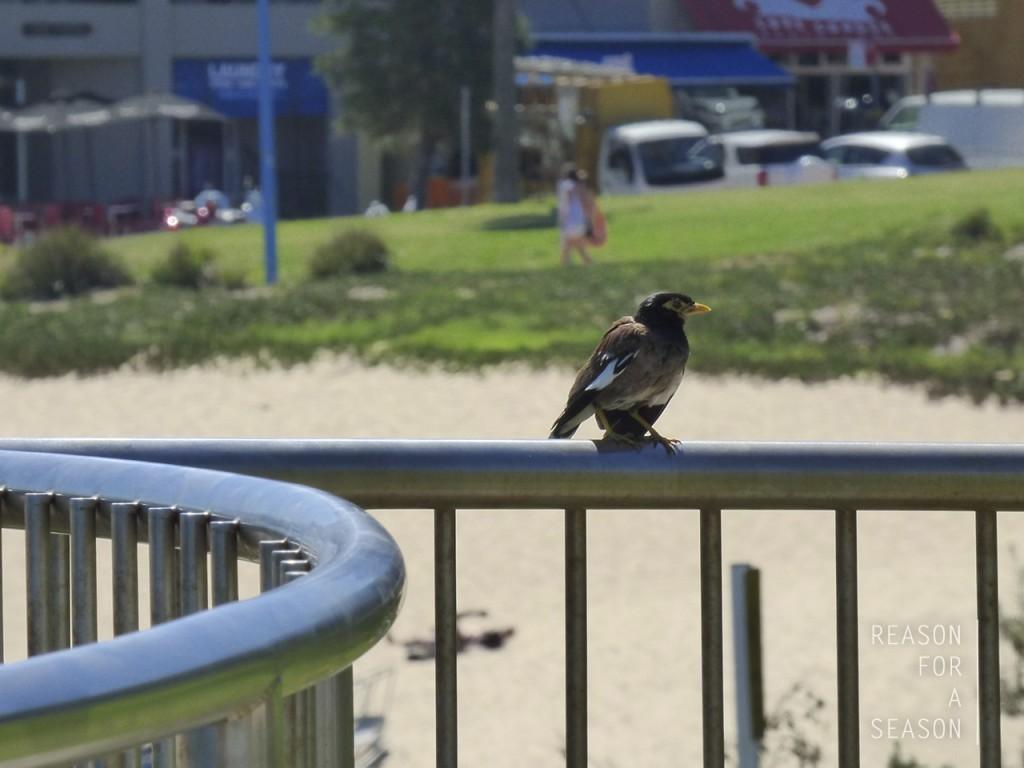 birdcoogee