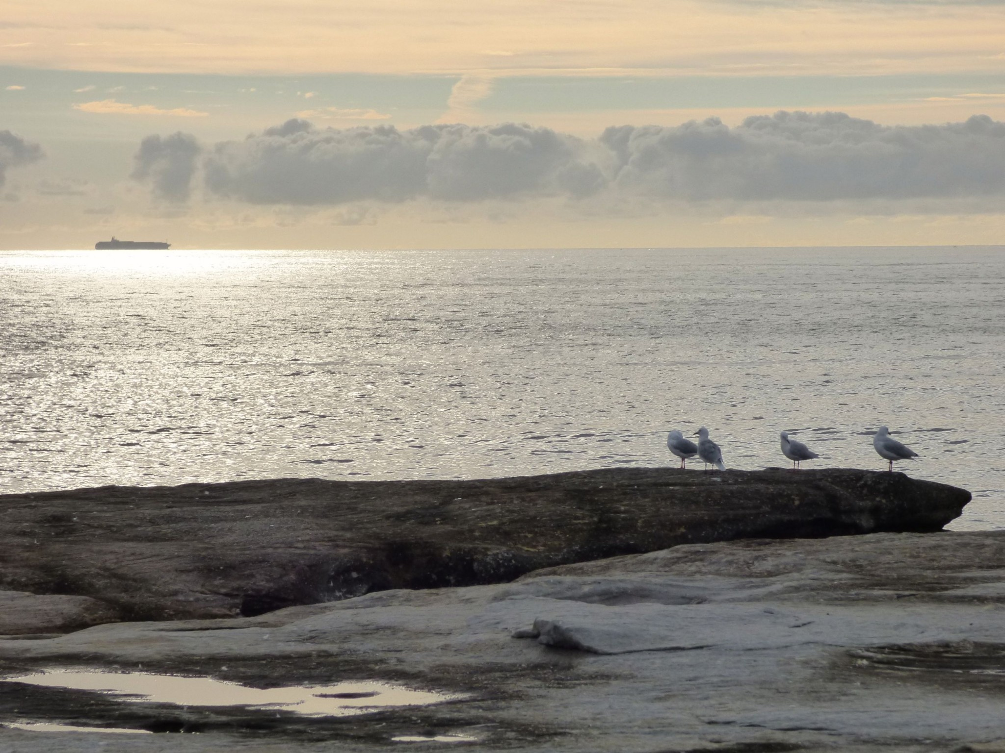 9. birds sydney 2