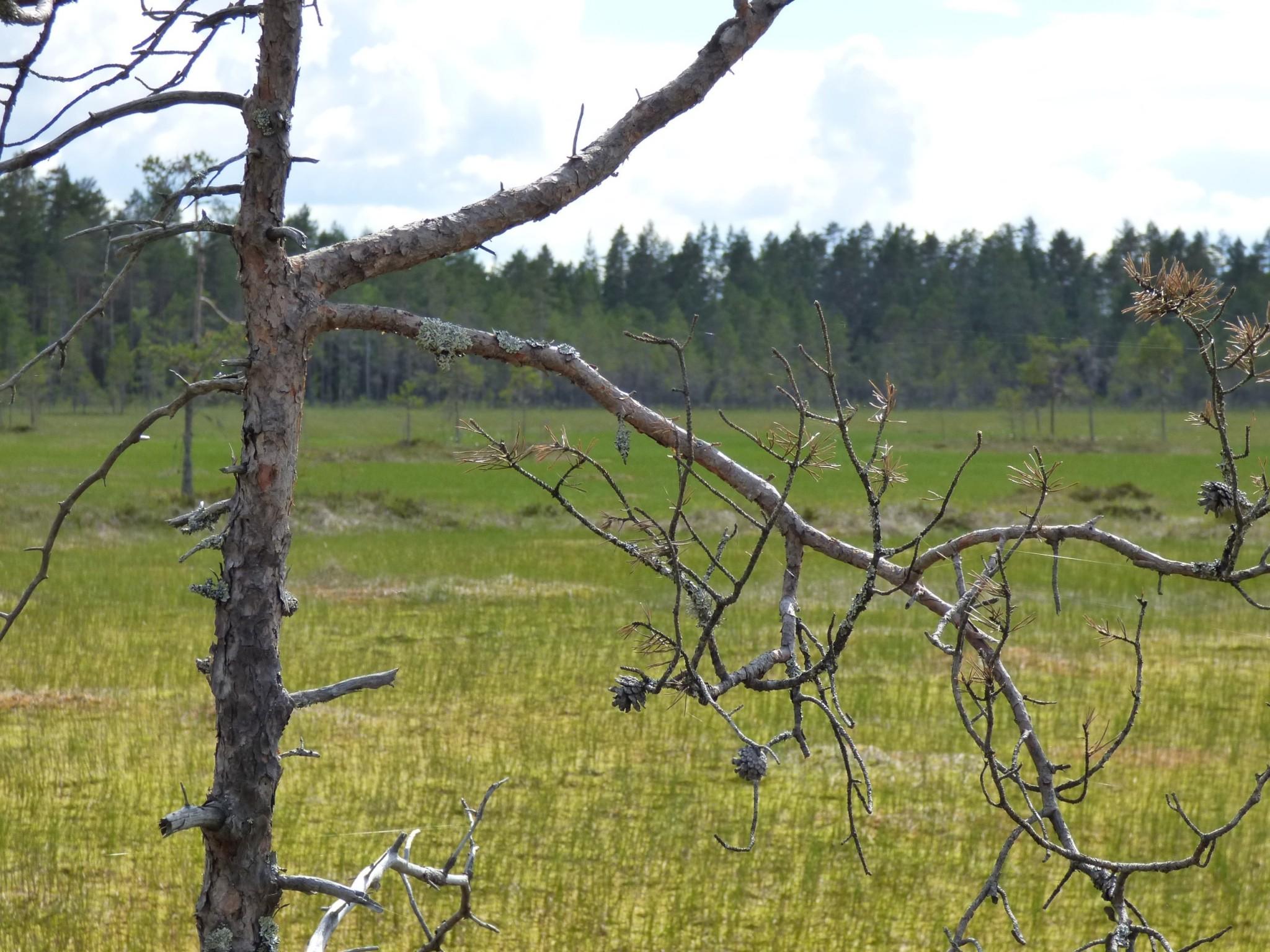 Kauhaneva kansallispuisto