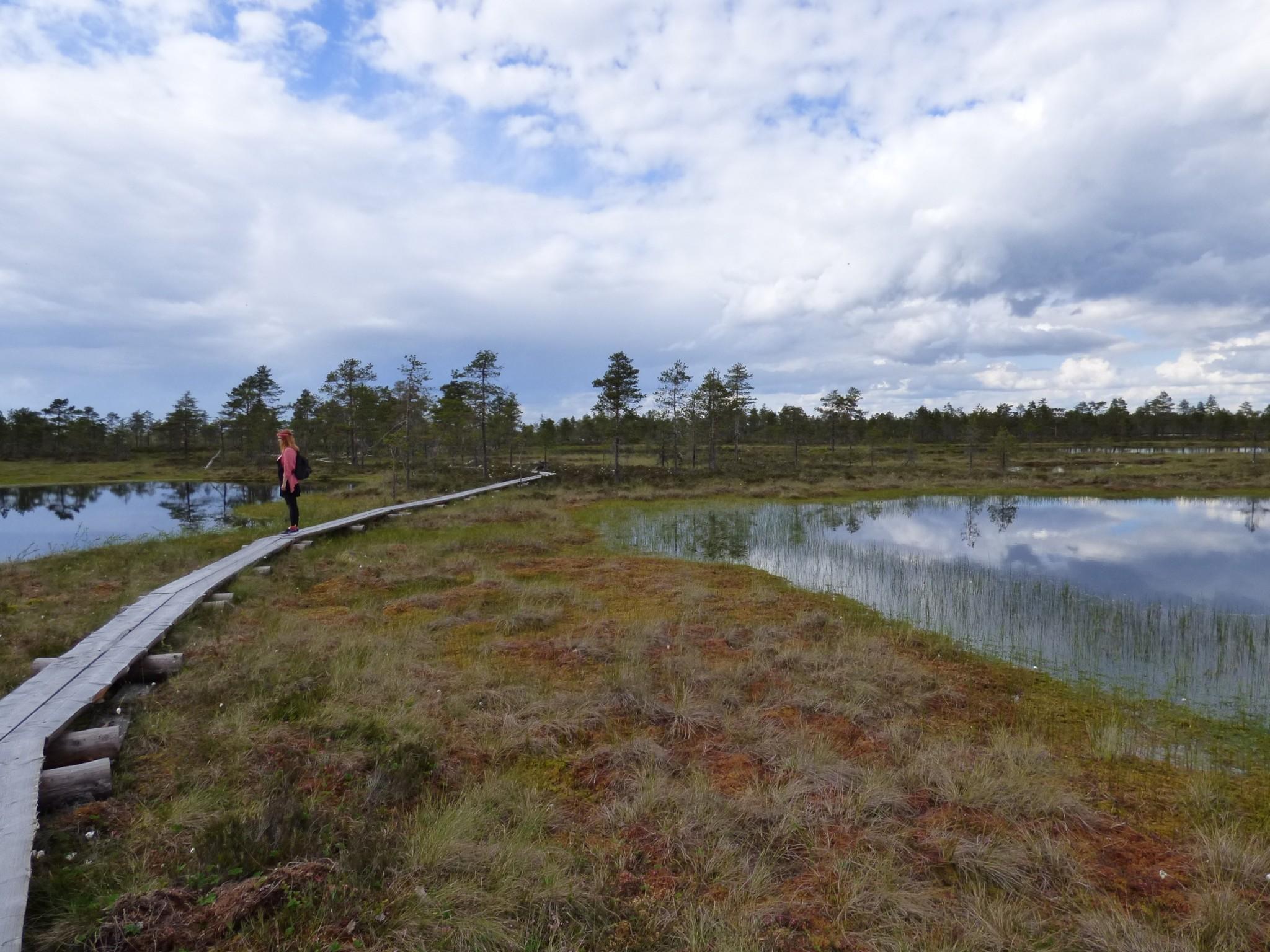 Kauhanevan-Pohjankankaan kansallispusito