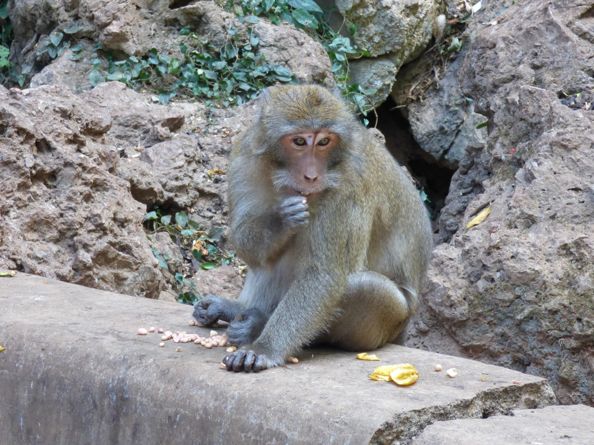 Apina phuket
