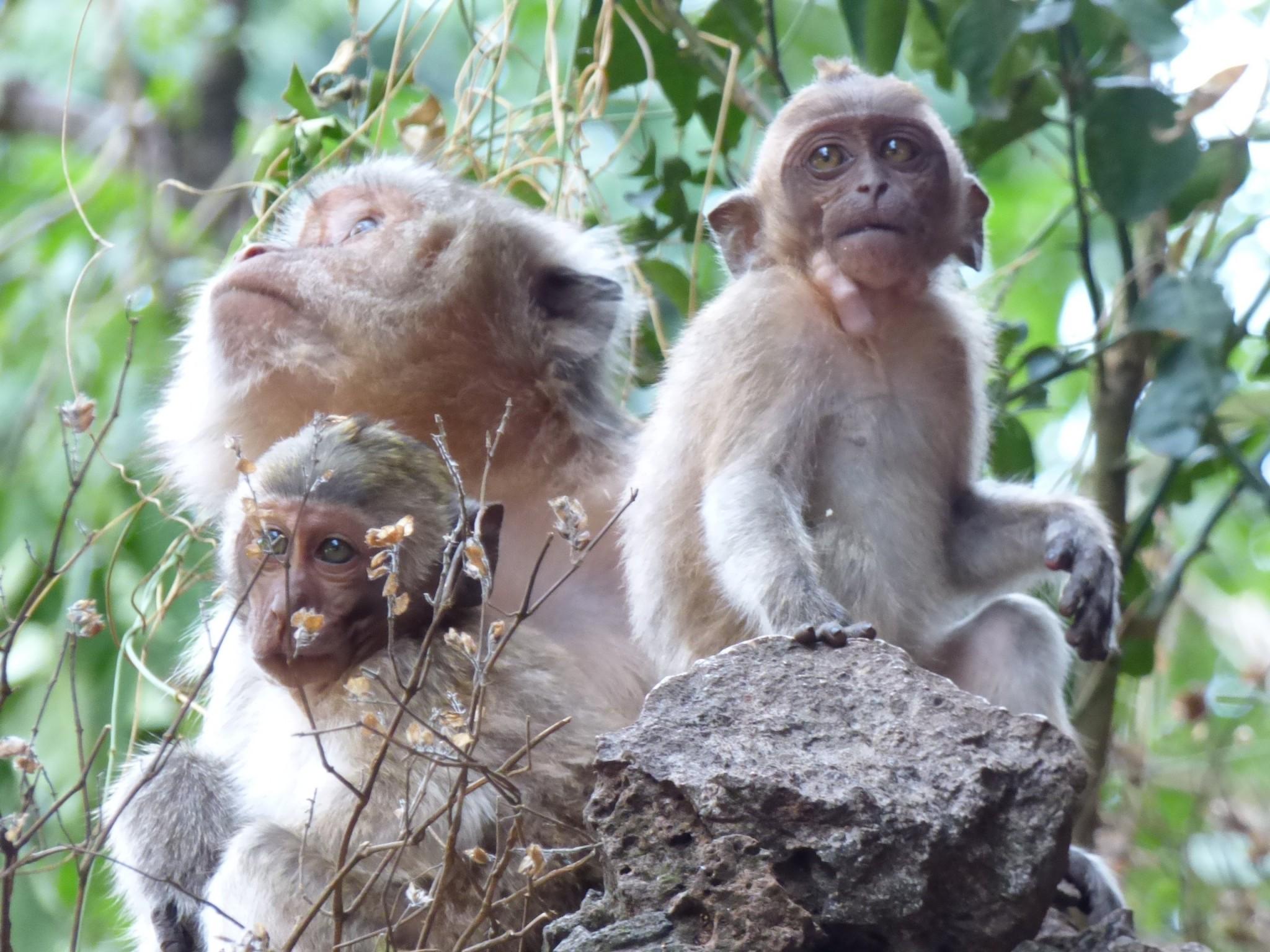 Apinat phuket