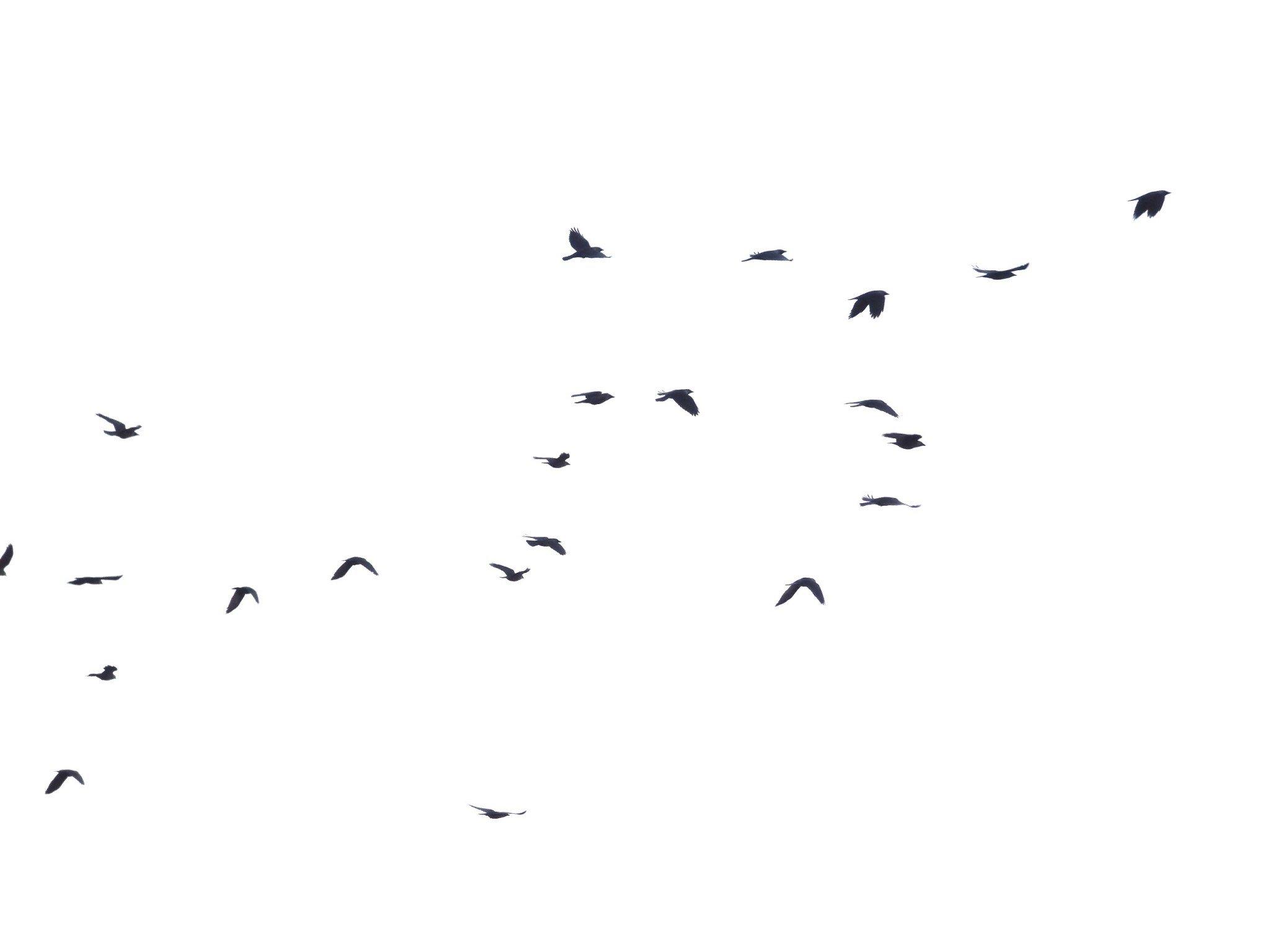 Tallinna linnut