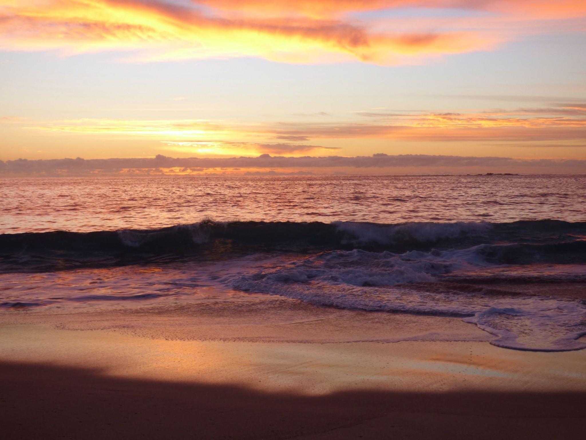 sunrise coogee
