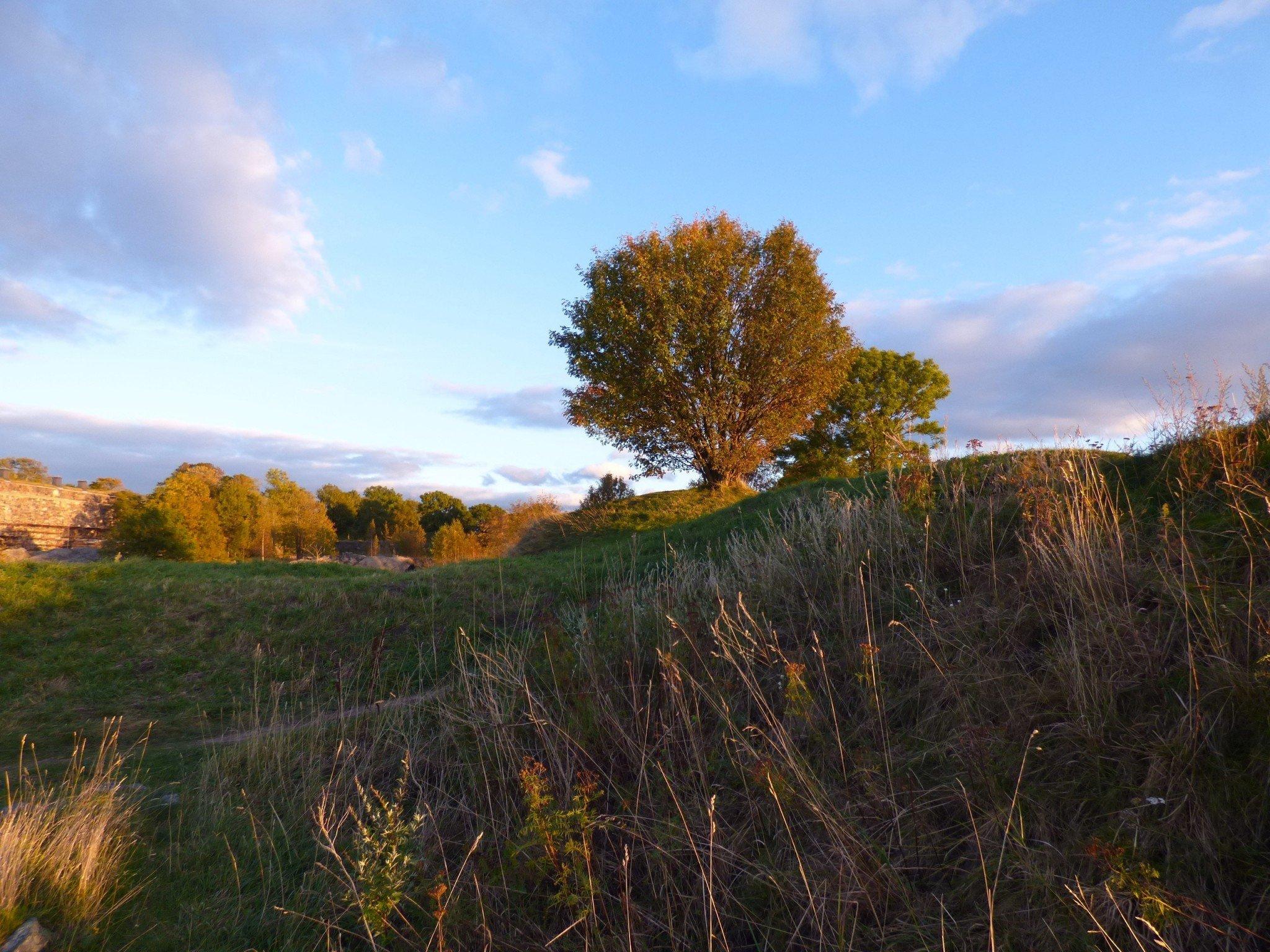Suomenlinna puu