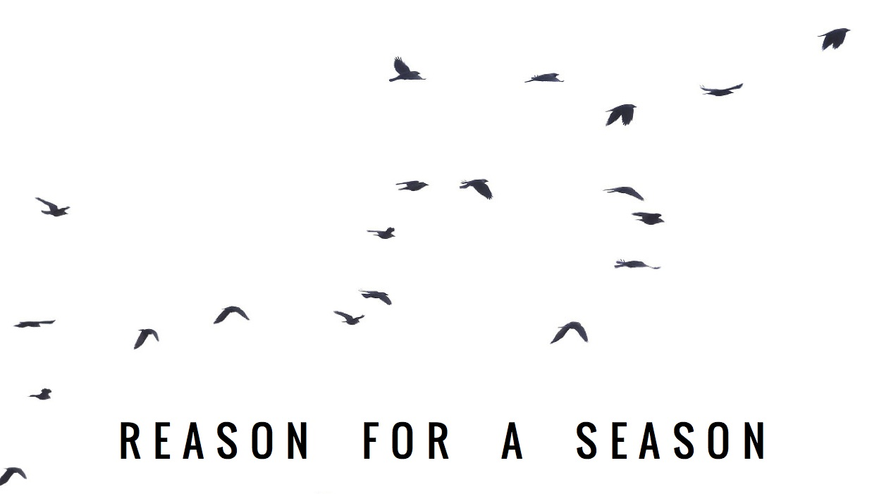 Reason for a Season