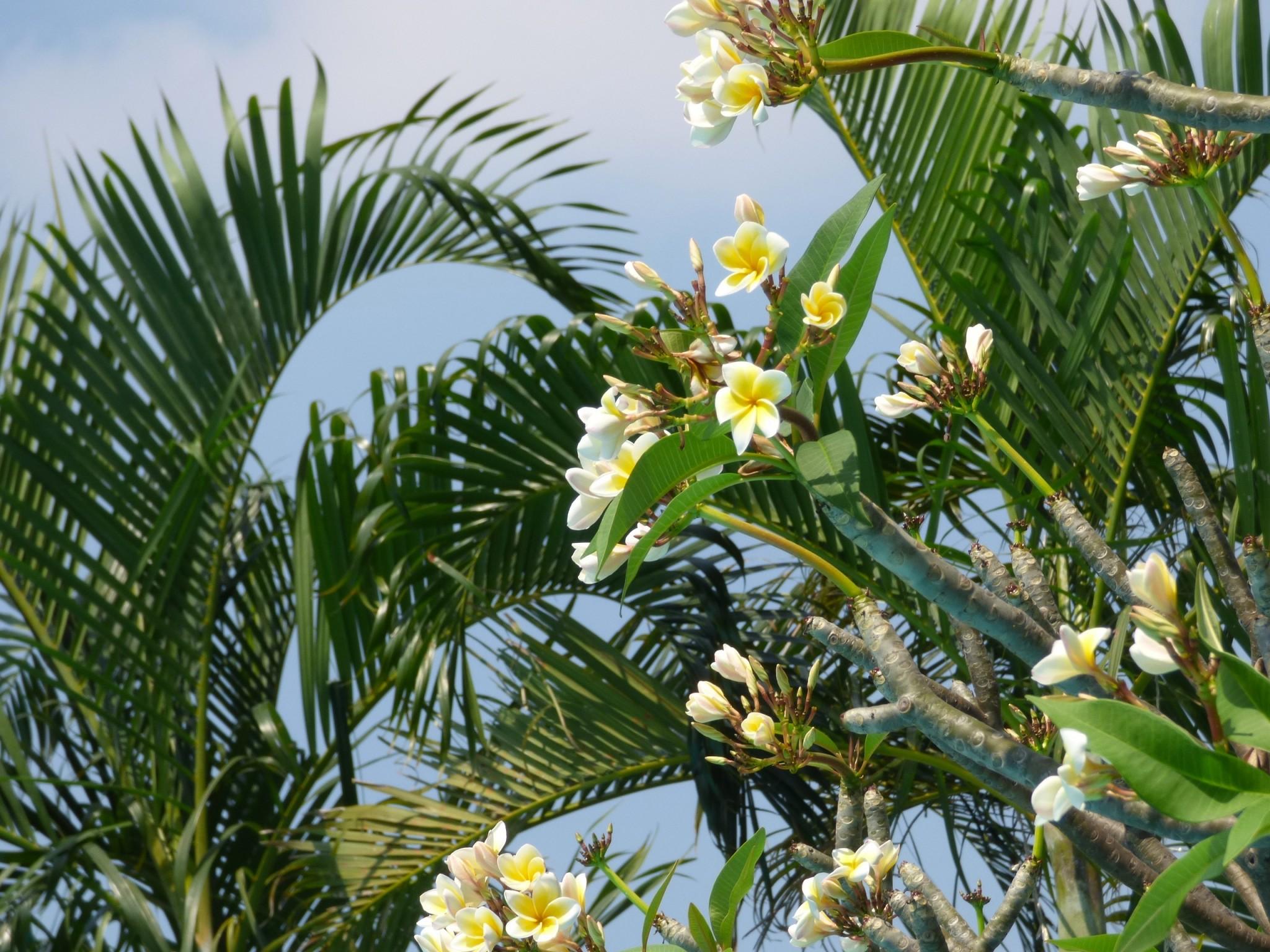Bangkok flowers