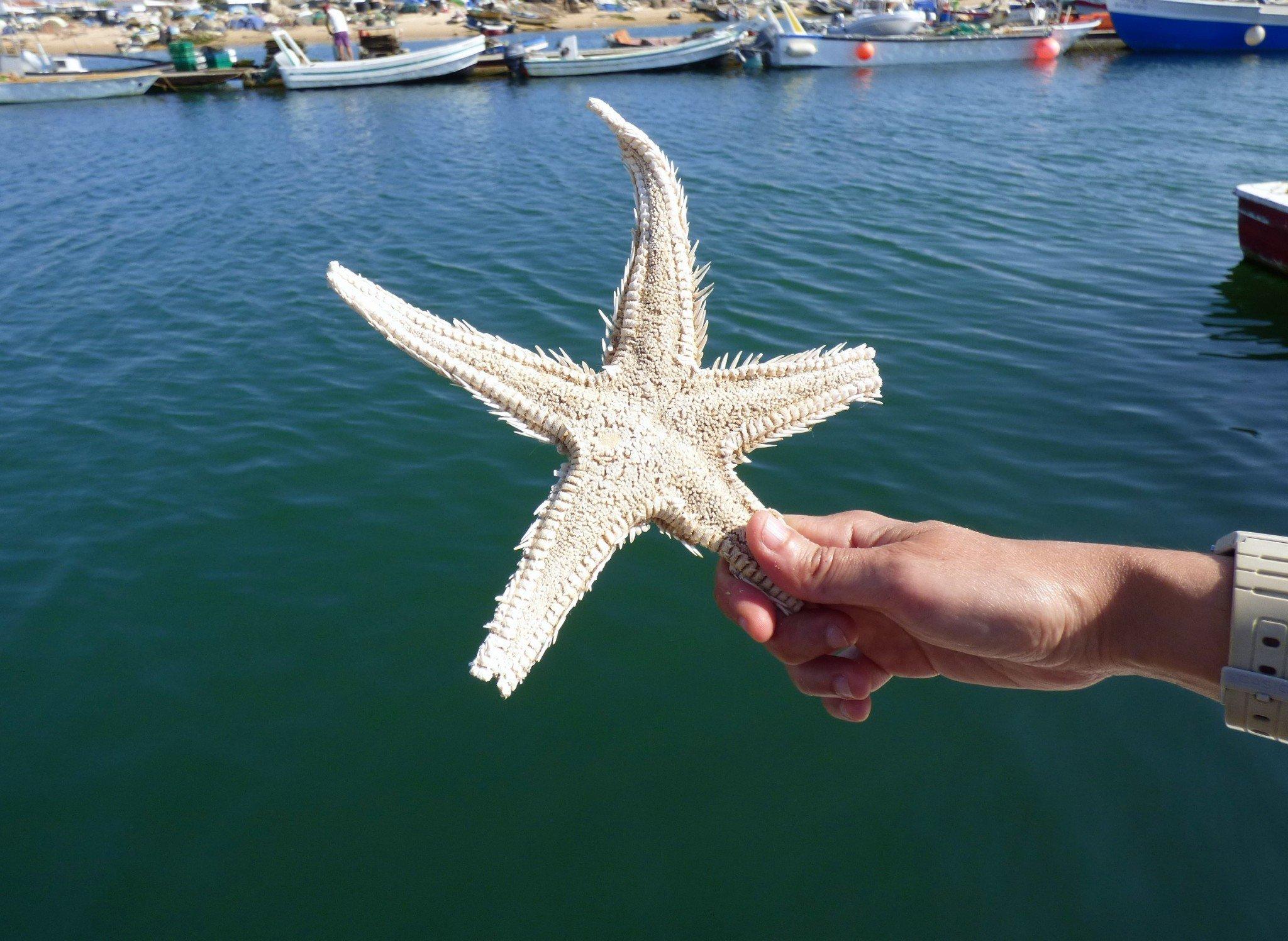 Algarve Culatra meritähti