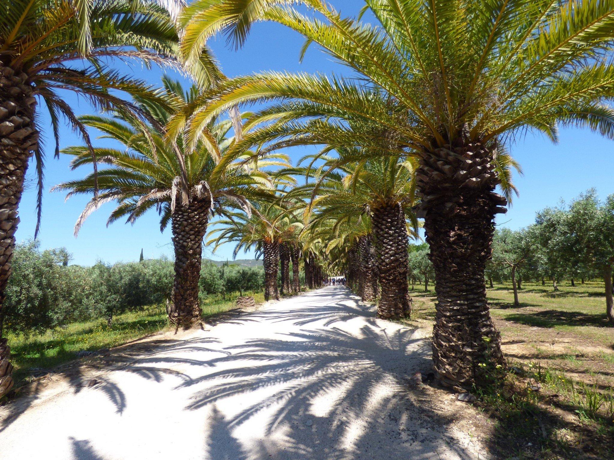 Algarve palmut