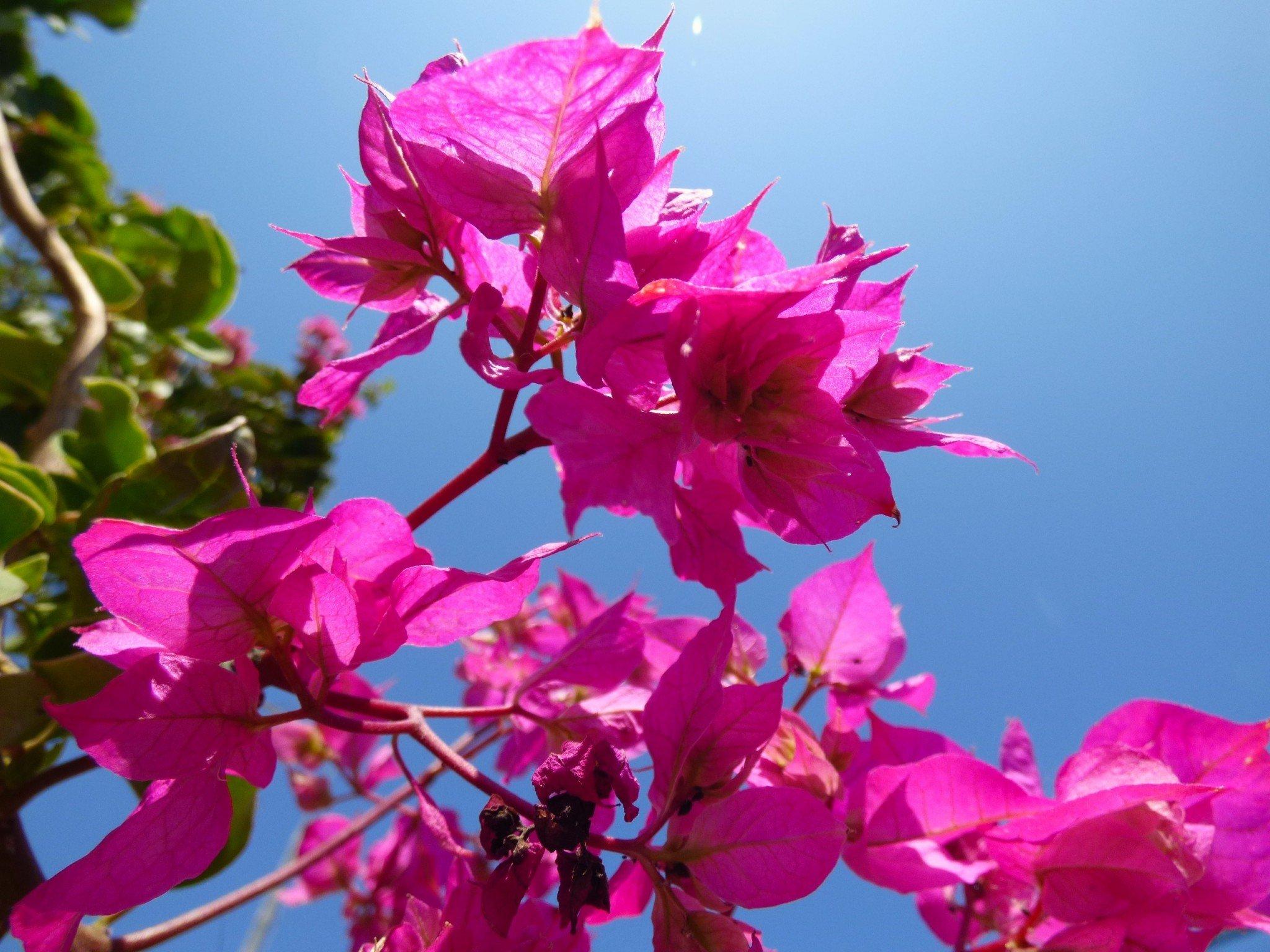 Algarve kukkanen