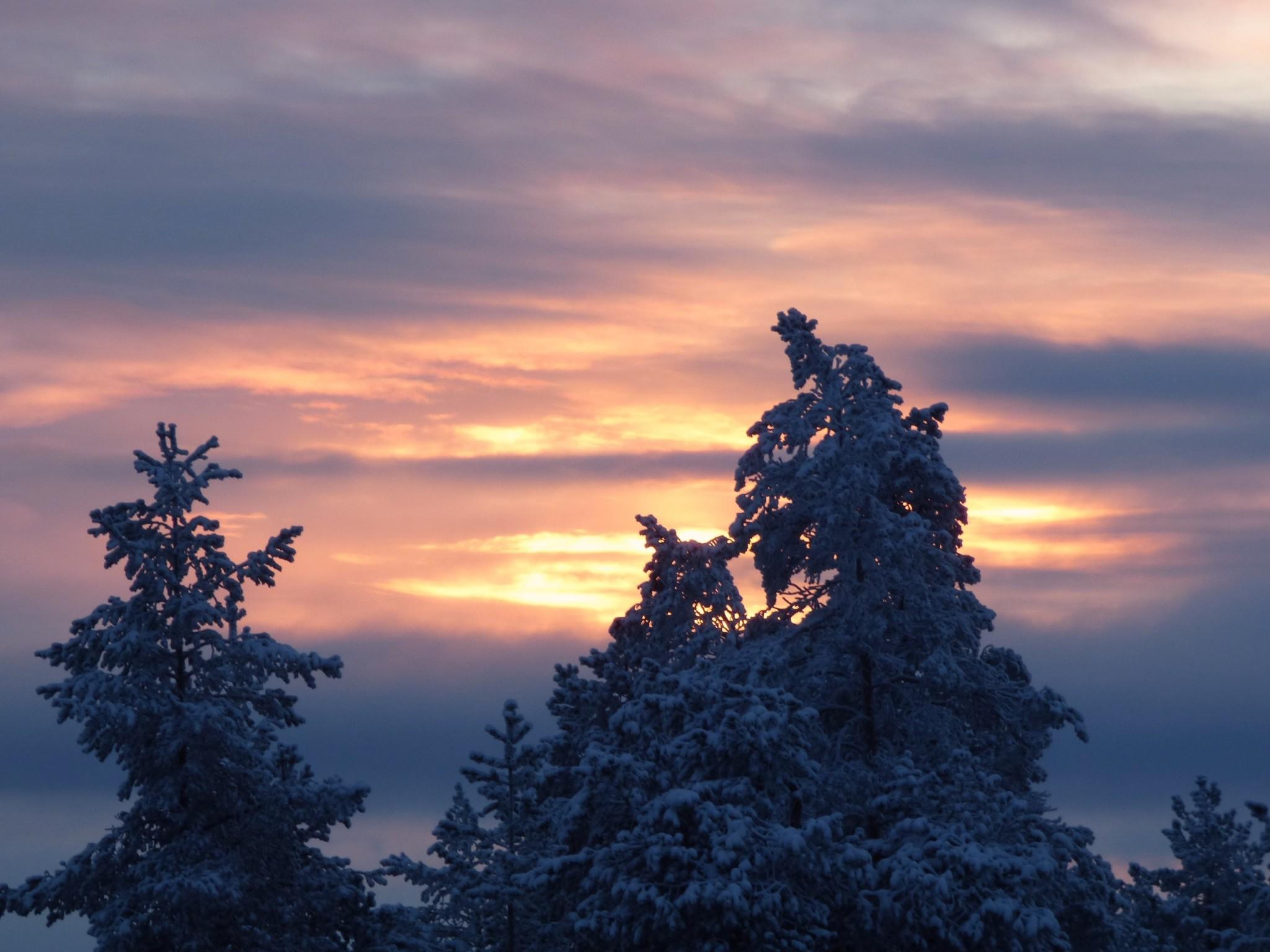 Kuusi Rovaniemi