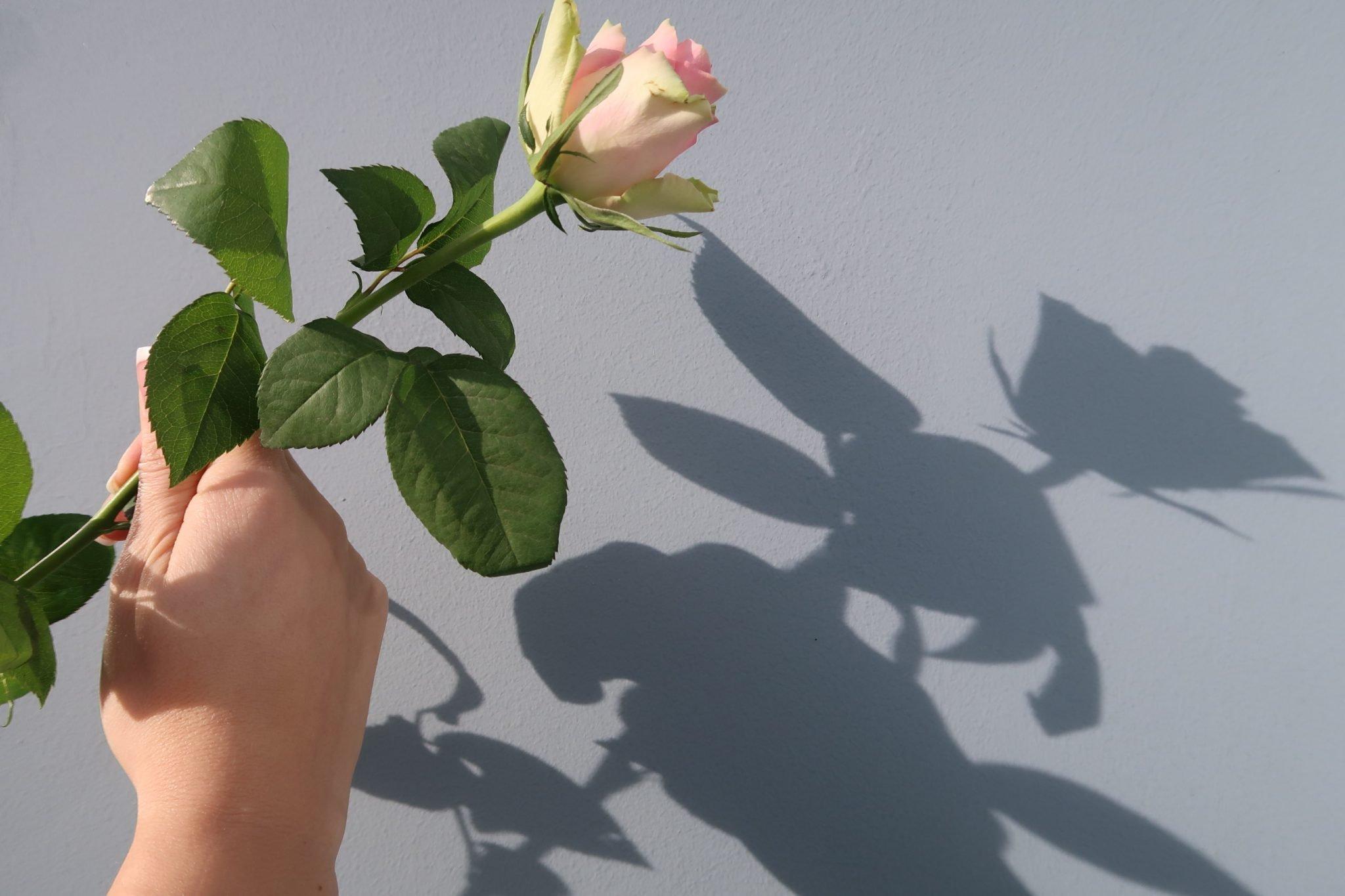 Lahden Seurahuone ruusu
