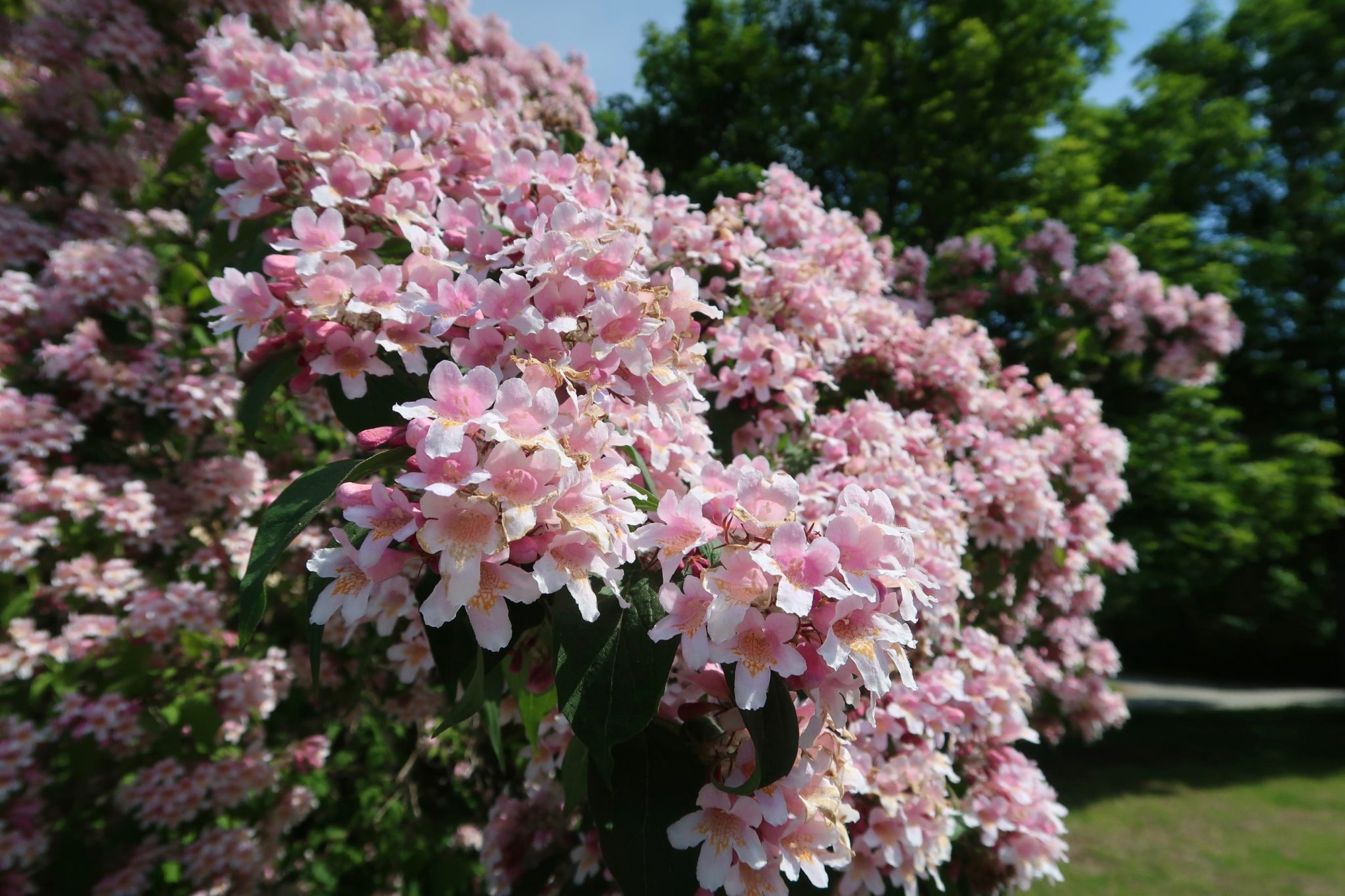 Tukholma Bromma kukat