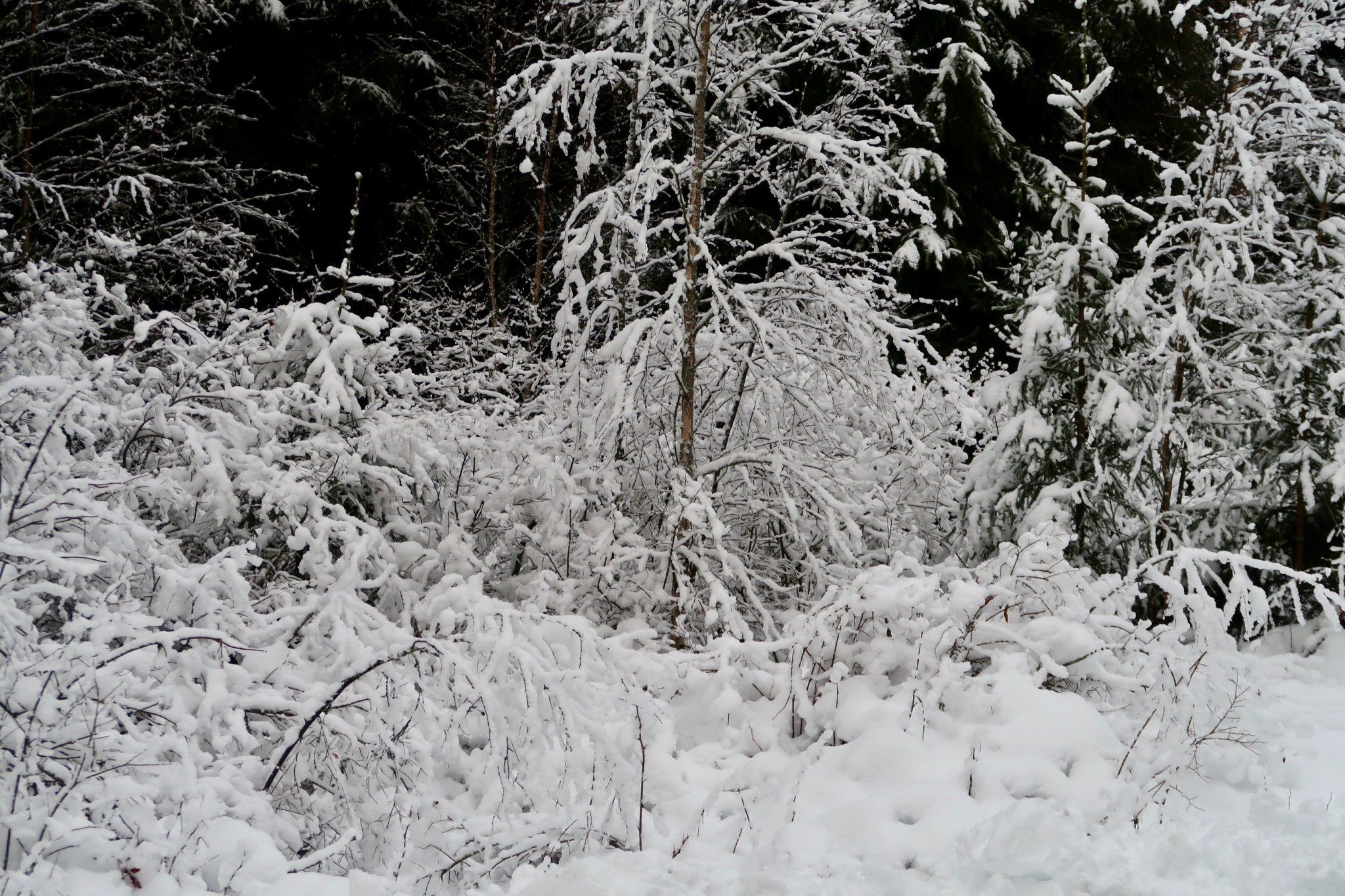 Kankaanpää talvi