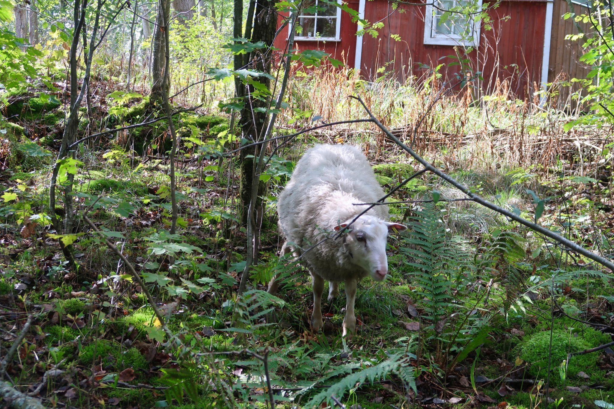 Lammas Kuusiluoto