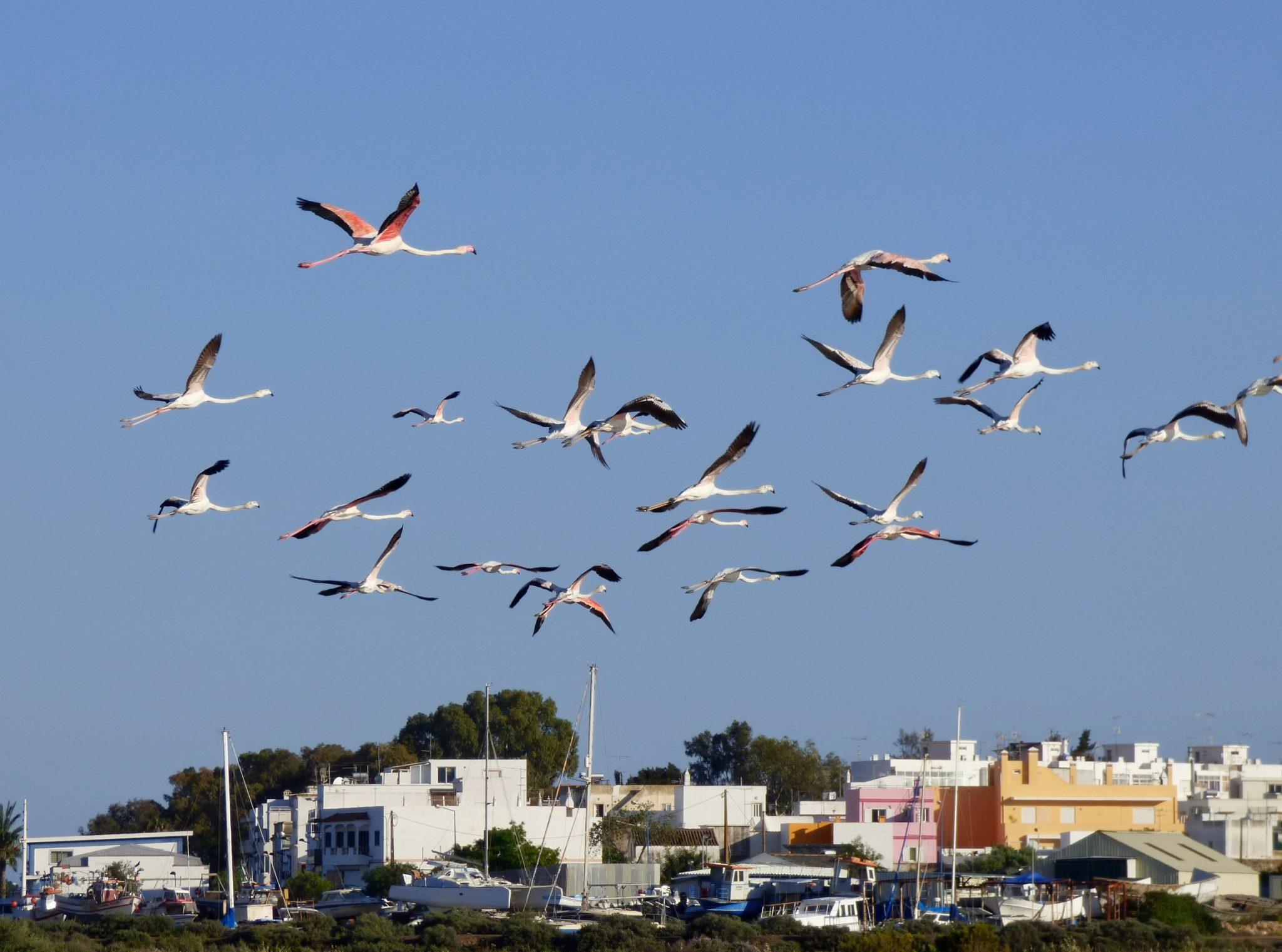 Flamingot Algarve Portugali