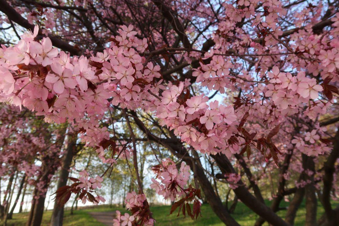 kirsikka menee dating katsella verkossa luettelo Top International dating sites