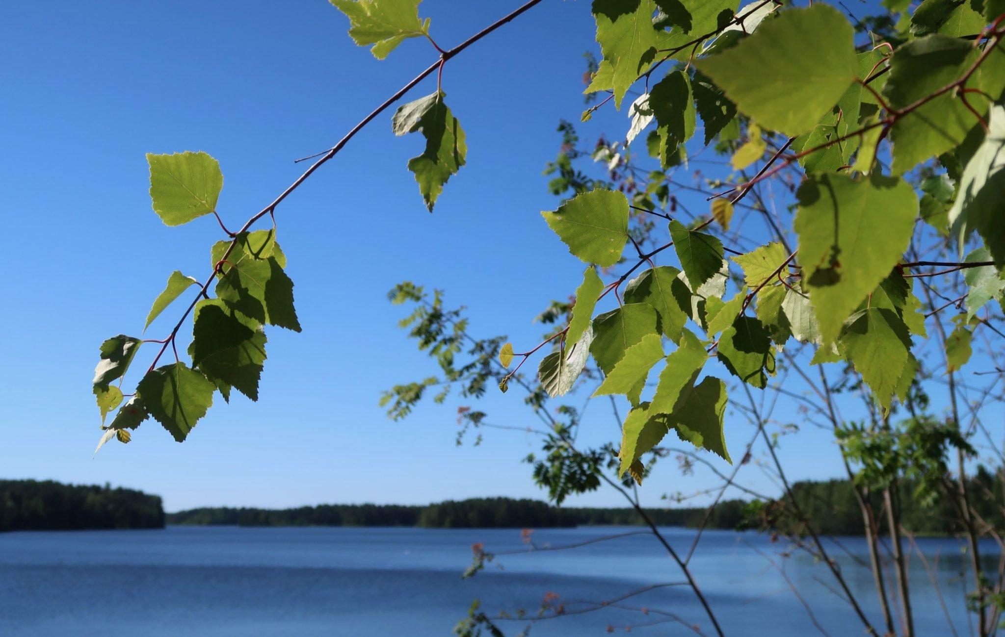 Kankaanpää järvi