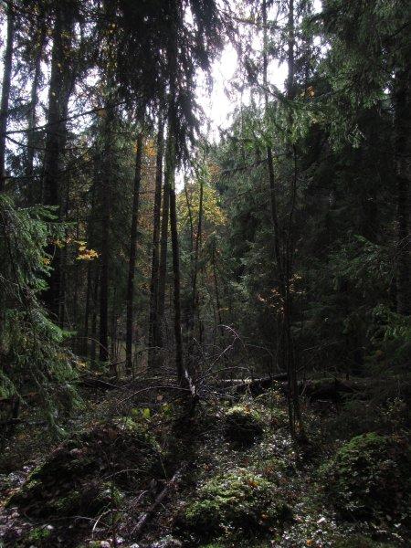Nuuksio_Kansallispuisto_5739_Copyright_Matkoilla_blogi