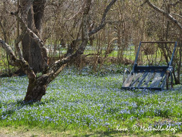 Kevät täydessä kukassa. Kuva: © Matkoilla-blogi