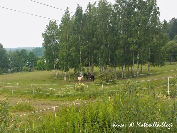 Kesäisessä suomalaismaisemassa perinteisempiä hevosvoimia.... Kuva: © Matkoilla-blogi
