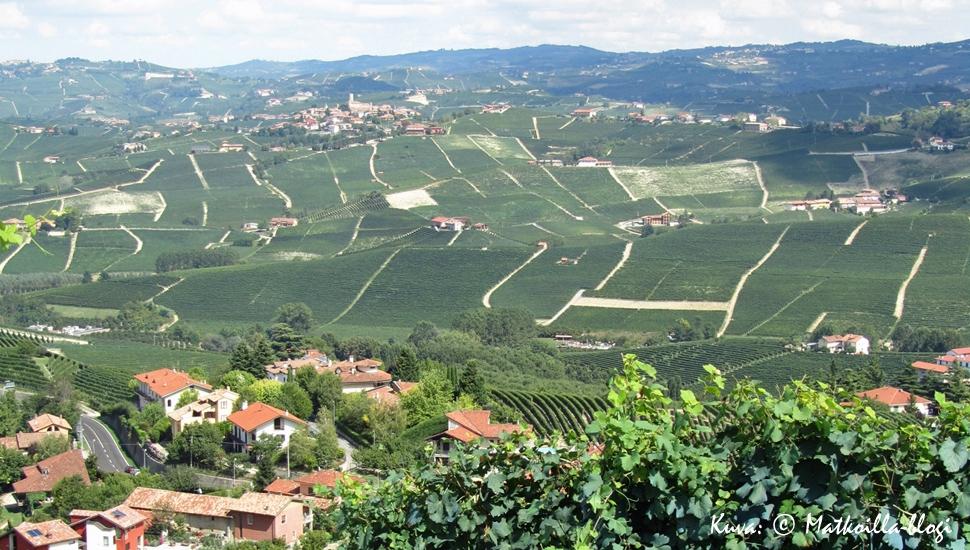 Piemonten viinirinteiden kumpuavia maisemia riittää miltei silminkantamattomiin. Kuva: © Matkoilla-blogi