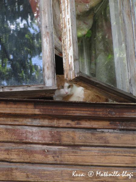Kas, kass Kalamajan majassa. Kuva: © Matkoilla-blogi