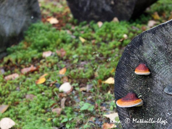 Syksy tekee tuloaan ja kellastuvat lehdet putoilevat. Kuva: © Matkoilla-blogi