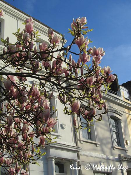 Keskiviikon kuva: Lontoon kevättunnelmia, maaliskuu 2011. Kuva: © Matkoilla-blogi