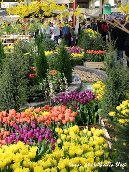 Kevätpuutarhaan kuuluvat ehdottomasti tulppaanit… . Kuva: © Matkoilla-blogi