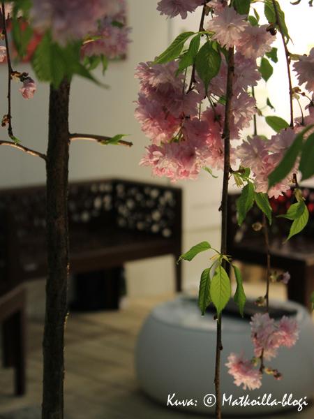 Ei kevättä ilman kukkivia kirsikkapuita. Kuva: © Matkoilla-blogi