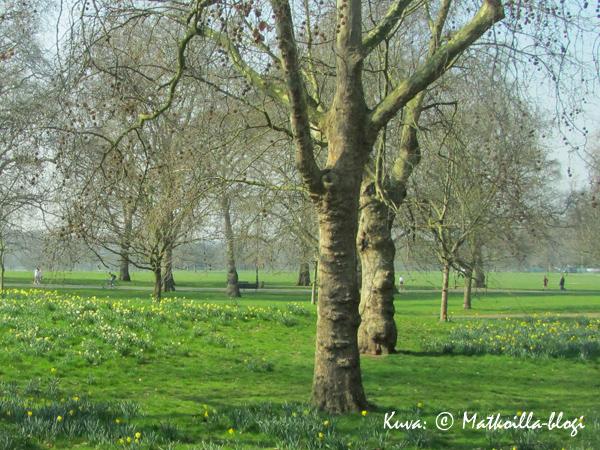 Lontoon Hyde Park kevätasussa, maaliskuu 2011.  Kuva: © Matkoilla-blogi