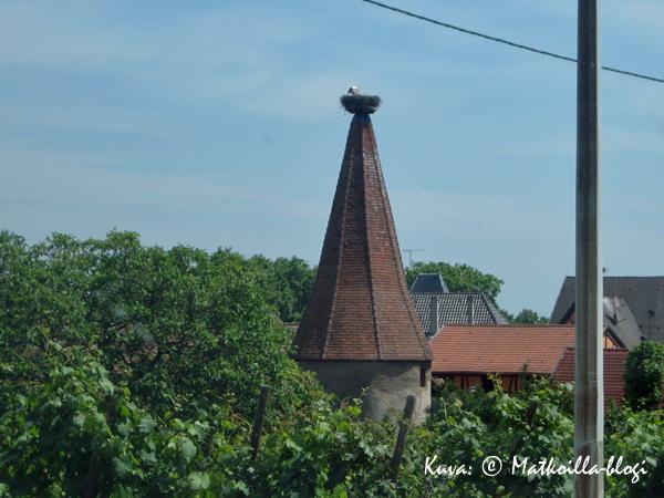 Alsacen maisemaan kuuluvat haikaranpesät. Kuva: © Matkoilla-blogi