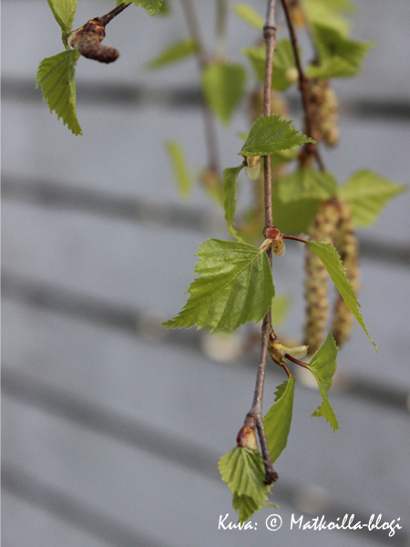 Haastavan kevään juuri ja alku. Kuva: © Matkoilla-blogi