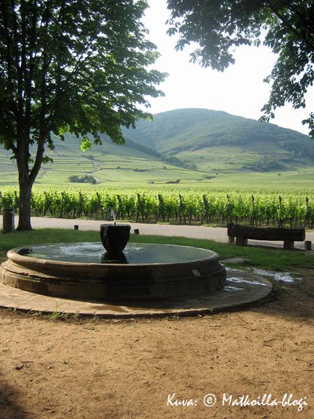 Kientzheimin kylän ulkopuolella alkavat heti viinitarhat. Kuva: © Matkoilla-blogi