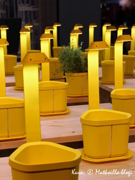 Pirteän keltainen Genie-yrttiruukkuvalaisin. Kuva: © Matkoilla-blogi