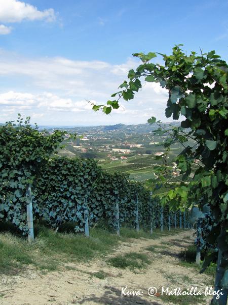 Langhen viinitarhoja, laaksoja ja kukkuloita. Kuva: © Matkoilla-blogi