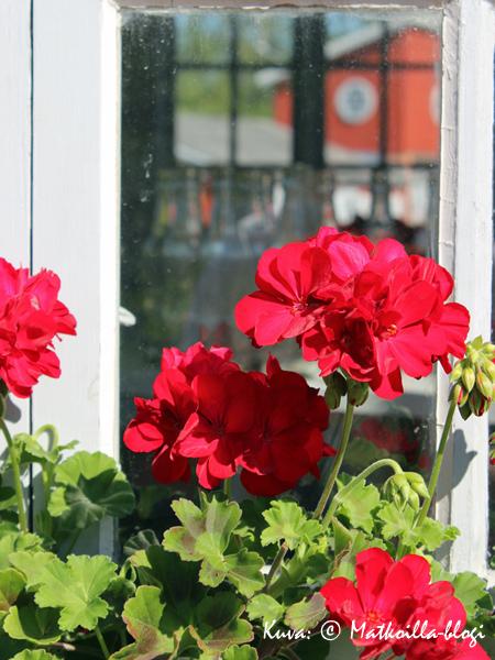 Aspegrenin puutarha. Kuva: © Matkoilla-blogi