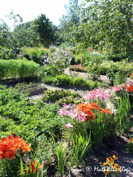 Aspegrenin puutarha on nykyään jaettu viljelypalstoihin, joita yksityishenkilöt viljelevät. Kuva: © Matkoilla-blogi