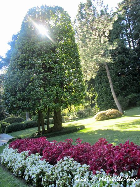 Villa Carlottan puutarhan kukkaloistoa. Kuva: © Matkoilla-blogi