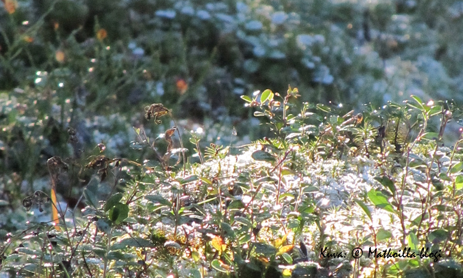 Keskiviikon kuva: Ensilumi. Kuva: © Matkoilla-blogi