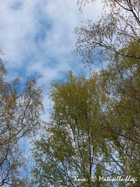 Koivut sinitaivasta vastaan - voiko suomalaisempaa olla? Kuva: © Matkoilla-blogi