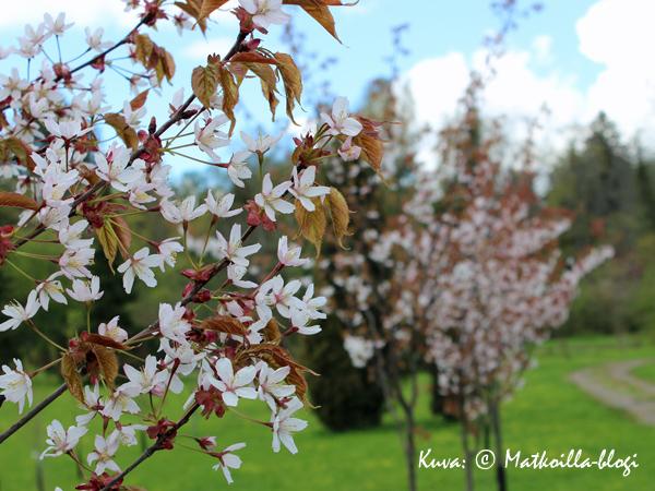 Arboretum Mustila. Kuva: © Matkoilla-blogi