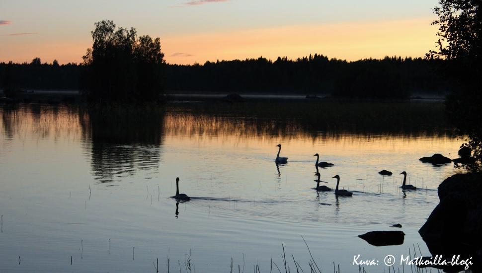 Kuukauden kuva: Joutsenten iltauinti, elokuussa 2014. Kuva: © Matkoilla-blogi