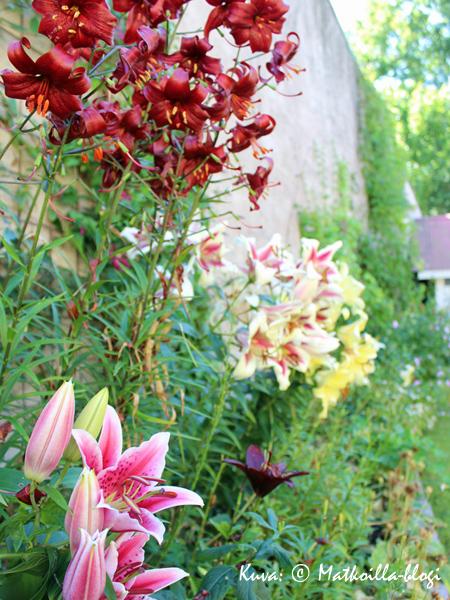 Smirnoffin talon puutarhaloistoa. Kuva: © Matkoilla-blogi