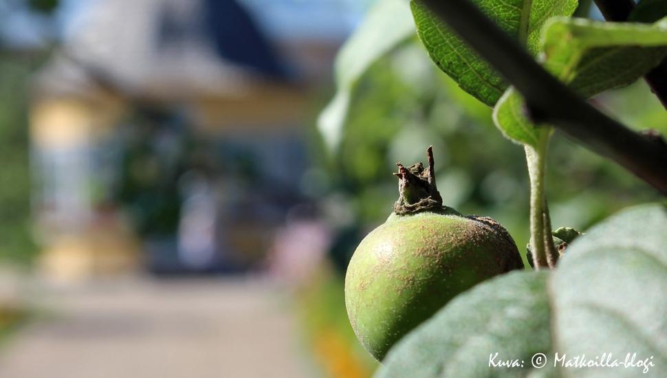 Omenapuu. Kuva: © Matkoilla-blogi