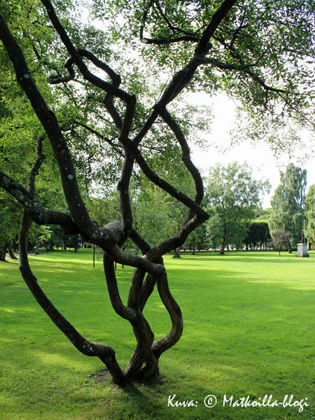 Kadriorgin puisto. Kuva: © Matkoilla-blogi