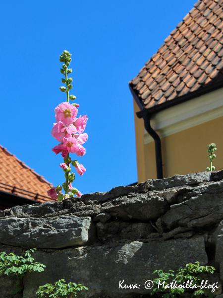 Visby - kukkiva kaupunki. Kuva: © Matkoilla-blogi