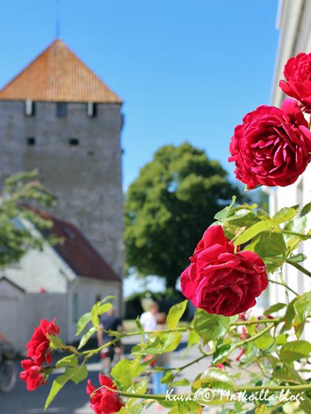 Ruusuja & Ruutitorni. Kuva: © Matkoilla-blogi