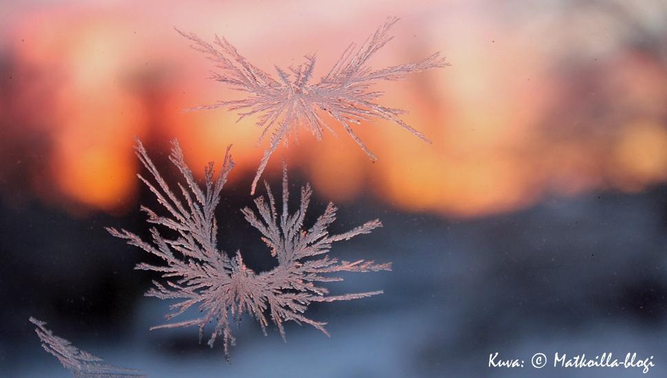 Kuurankukkia jouluna. Kuva: © Matkoilla-blogi